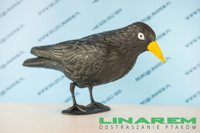 odstraszacz gołębi kruk makieta