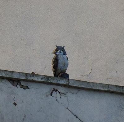 sowa dachowy odstraszacz ptaków